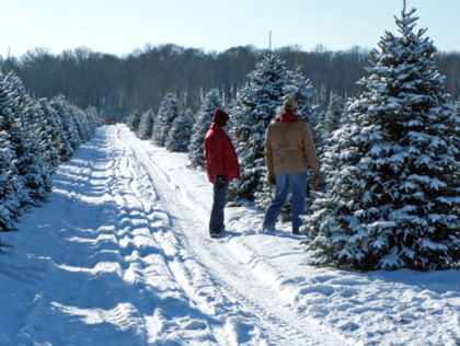 Cut Down Christmas Tree Near Me.Best Places To Cut Down Your Own Christmas Tree In The Dc