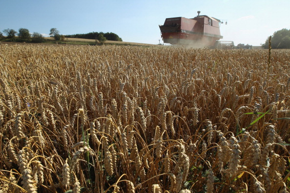 Unapproved Genetically Modified Wheat Found in Oregon Field
