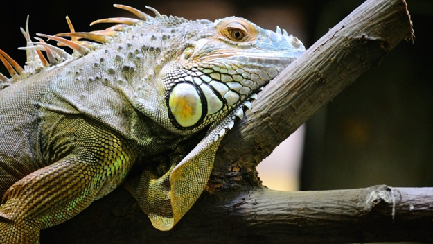 Best Pet Shops for Reptile Owners in Washington, D C  – CBS DC